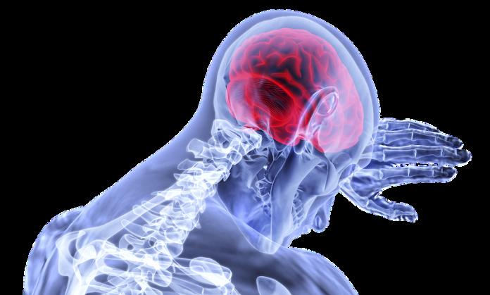 Hirnfunktion Körper und Geist